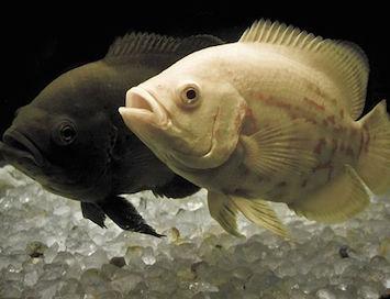 Come pesci in un acquario - Pesci e acquario a letto ...